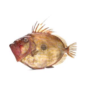 Fisch frisch und tiefkühl