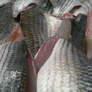 Diklip Harder: Gefileerd met huid van hele vis (brutogewicht)